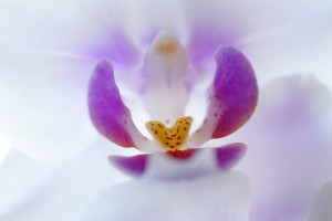 orchid-705181_1280