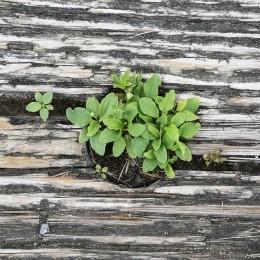 plant-413717_1280